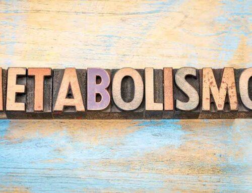 ¿Qué efectos tiene el entrenamiento muscular en el metabolismo?
