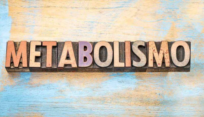 entrenamiento muscular efectos en metabolismo