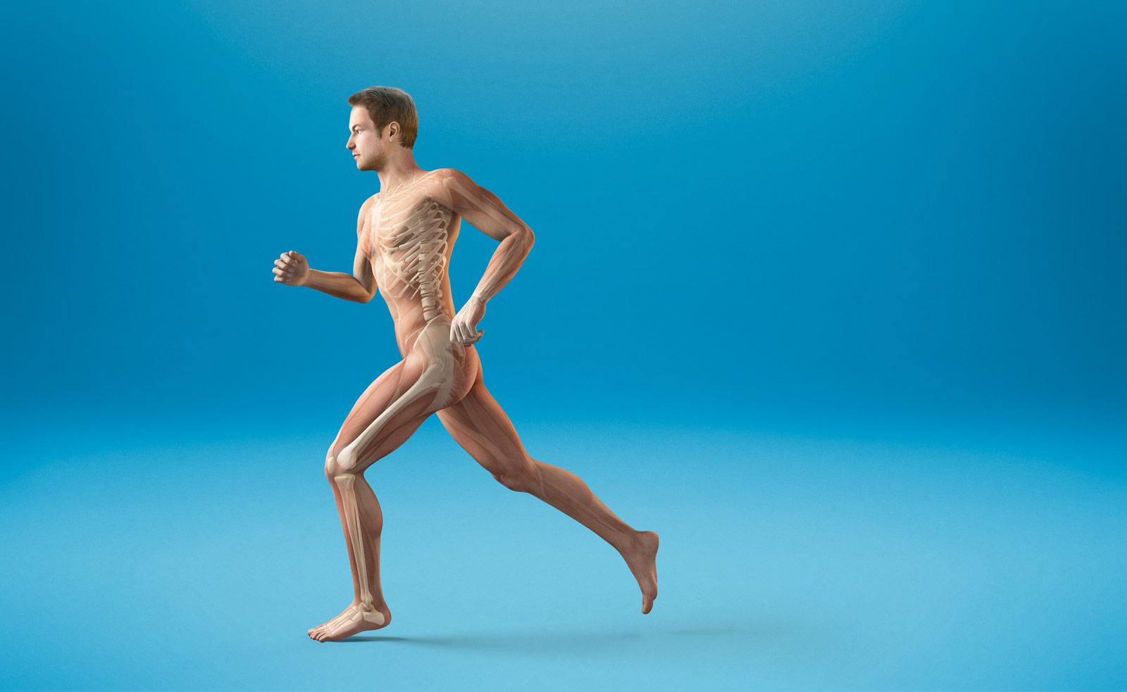 entrenamiento muscular