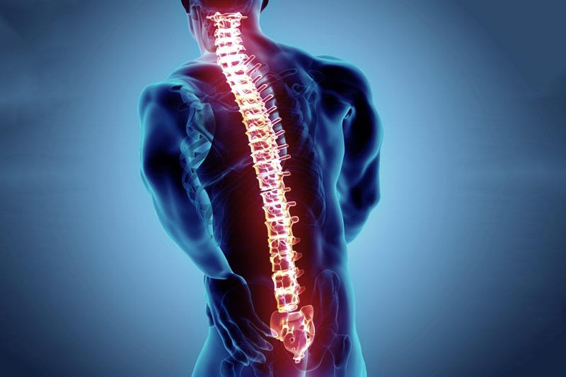 Anatomía de la columna vertebral y funciones | Wunder Training